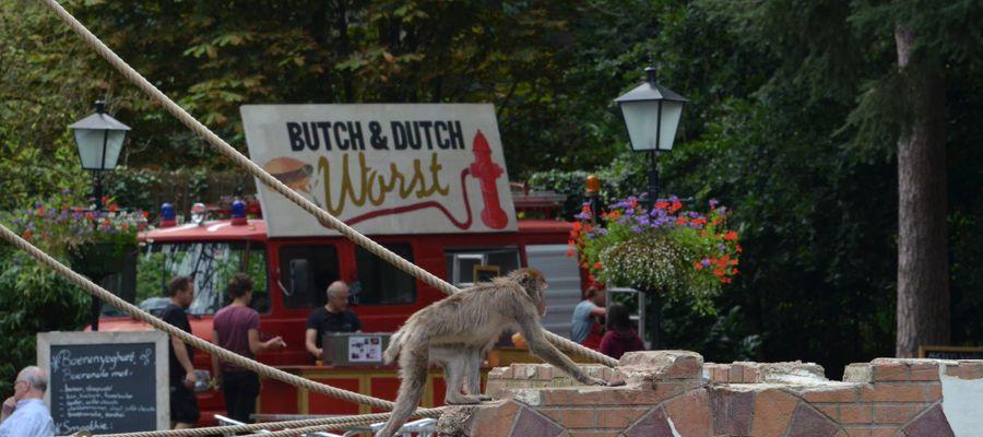 Zoo'n Zoomer Food Festival 2017 gespot! - FoodtruckSpotters.nl